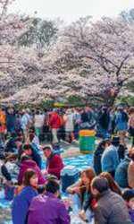 Festivalul florilor de cireș în Parcul Ueno, Tokyo