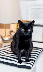 apuVineri, pisica Fabuloasei și a lui Otravă, a fost adoptată de Black Friday