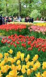 Explozie de culoare: lalelele din Keukenhof Gardens, Olanda