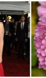 crizanteme, begonie sau garoafe