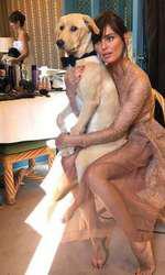 Catrinel și câinele său, Pablo