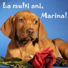 La multi ani, Marina