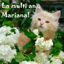 La multi ani, Mariana