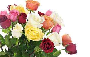 Află ce semnificație au culorile trandafirilor