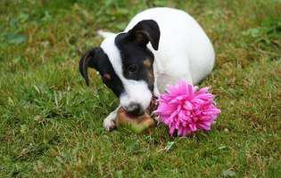 Alimentația câinelui și a pisicii - legume și fructe permise