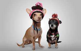 Greșeli pe care le fac iarna proprietarii de câini