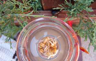 rejuvelac, băutură probiotică din grâu încolțit