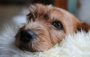Sfaturi pentru a ameliora durerile la stomac ale câinelui tău