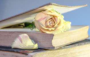carte, trandafir