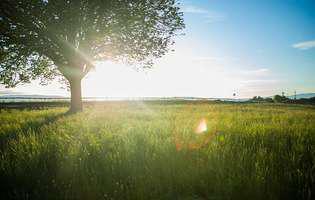 peisaj, natura, razele soarelui