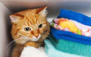 Ce caută pisica în dulap sau prin sertare? De ce are nevoie să se ascundă?