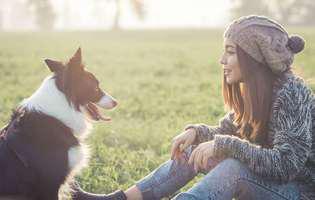 Top 5 rase de câini cuminți! Iată ce patrupezi simpatici ți-ar topi inima instantaneu!