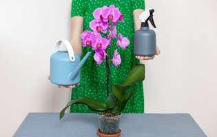 5 sfaturi esențiale pentru fertilizarea orhideelor înainte de înflorire