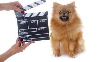 Câini faimoși care au câștigat mii de dolari pe platourile de filmare