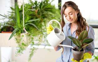 Cea mai simplă metodă să uzi florile când ești plecată în vacanță!