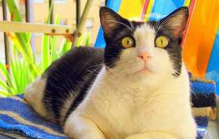 Sterilizarea pisicilor, necesitate sau moft?