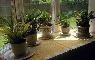 Ghid pe scurt despre fertilizatori