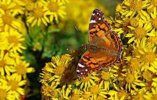 Flori exotice care atrag fluturii în grădină