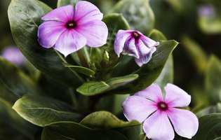 Apără-ţi florile de insecte!