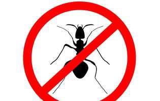 soluții naturale care alungă furnicile