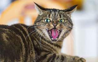 Cum te descurci cu pisica agresivă