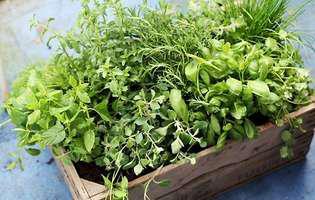 Cultivă mirodenii la ghivece!