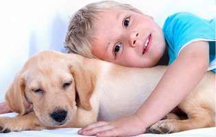Vrei un animal de companie pentru copilul tău? Iată cum îl poți alege