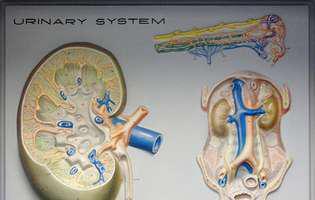 Cum te anunță rinichii când suferă