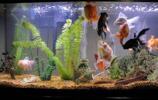Alege peşti cu personalitate pentru acvariul tău!