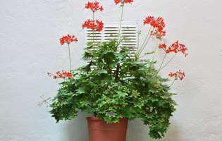 Cum alegi locul potrivit pentru plantele din casă