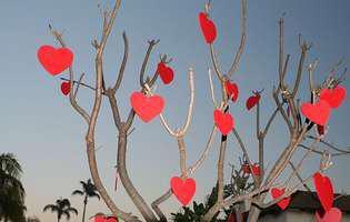 Sărbătorește și tu Ziua Îndrăgostiților!