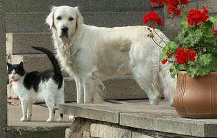 Glicemia la control! Câinele sau pisica ta pot suferi și ei de diabet