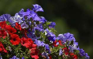 7 flori rezistente și ușor de întreținut