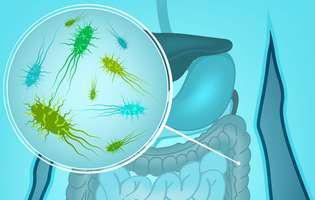 Flora bacteriană intestinală