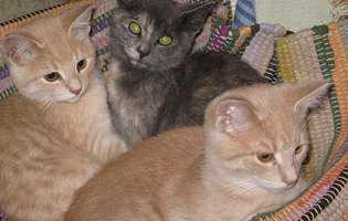 Cum îngrijeşti pisica sterilizată