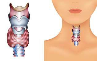 glanda tiroidă