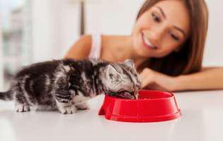De ce refuză animalele hrana
