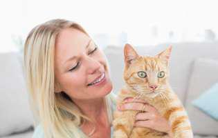 Pisică de rasă sau de maidan... ce alegi?