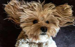 Toaleta zilnică pentru câinele tău, să aibă blana frumoasă