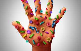 bacteriile