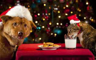 Delicatese de Crăciun pentru câinele tău