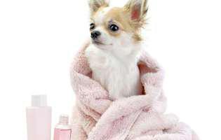 Cum faci baie animalului de companie pe timp de iarnă