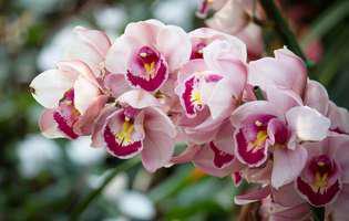 Flori de iarnă în balcoane