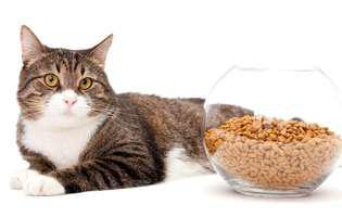 ce probleme au pisicile bătrâne
