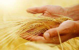 Sfinții recoltelor trebuie respectați
