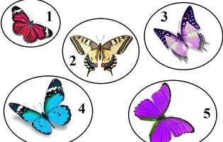Alege fluturele care-ți place și află cât ești de puternic!