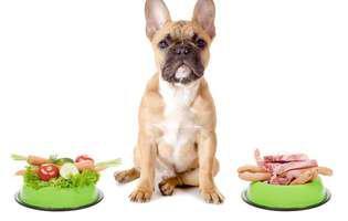 Ingredientele esențiale din hrana cățelului tău
