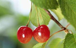 Fructele de iunie, deliciu terapeutic