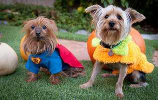Câinii au nevoie de haine în anotimpul rece?