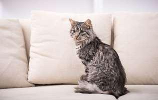 cum calculezi vârsta pisicii tale
